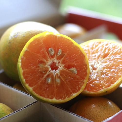 ส้มสายน้ำผึ้ง อำเภอฝาง เกรดพรีเมียม คัดพิเศษ ส่งฟรีถึงบ้านคุณ