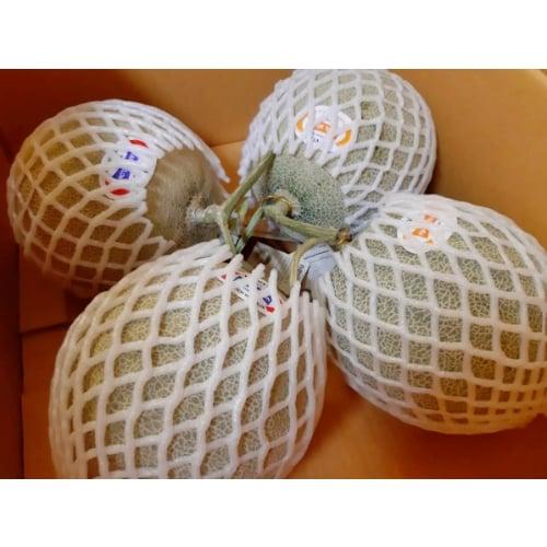 เมล่อนญี่ปุ่น (เนื้อส้ม) เกรดA ชุดครอบครัว 4 ผล