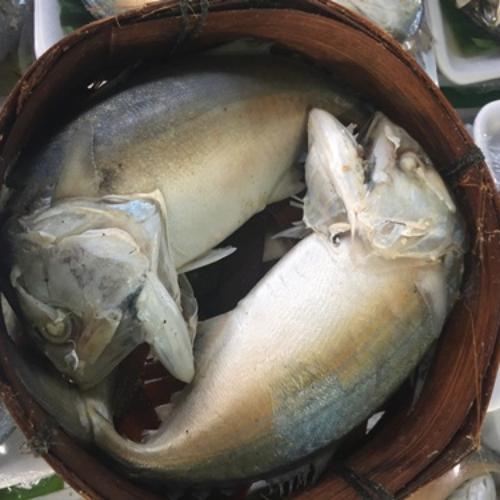 ปลาทูนึ่ง 3 ตัว (นน.650-750 กรัม) / แพ็ค