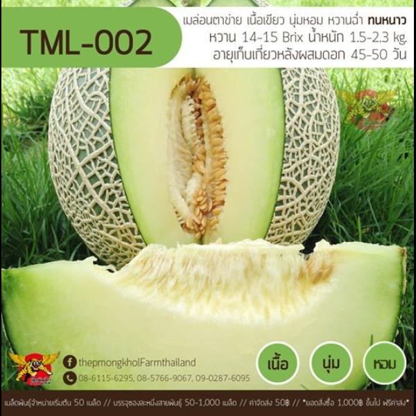 เมล็ดเมล่อนพันธุ์ TML-002 ทนหนาว 100 เมล็ด