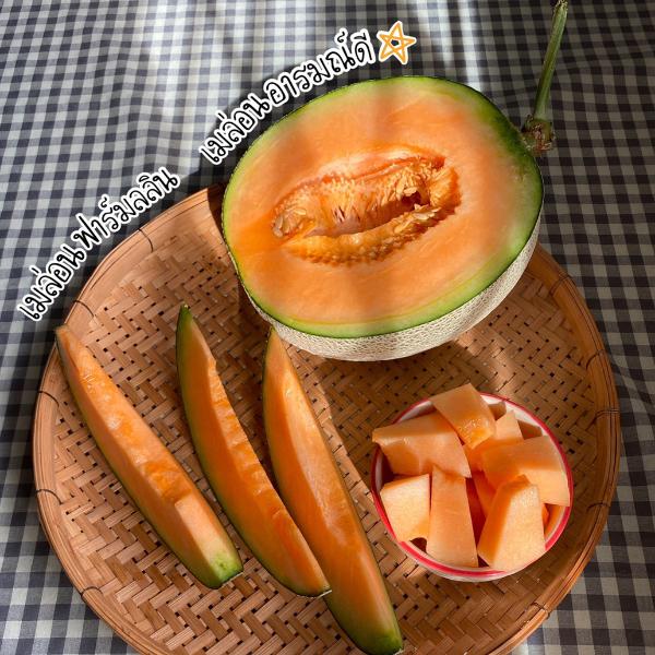 เมล่อนญี่ปุ่น พรีเมี่ยมไซส์ใหญ่คัดพิเศษ น้ำหนัก 2.5 กก.ต่อลูกขึ้นไป ส่งตรงจากสวนลลินเชียงใหม่  พันธุ์คาเนิมิซึ เนื้อส้ม กลิ่นหอม รสหวาน กรอบฉ่ำ