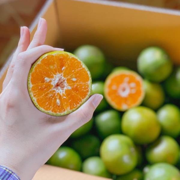 ส้มสายน้ำผึ้ง(ผิวลาย) อำเภอฝาง เบอร์ 5 นน. 5 กิโลกรัม