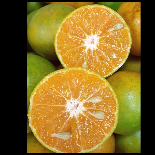 ส้มสายน้ำผึ้งบ่อสี่เหลี่ยม อำเภองาว จังหวัดลำปาง