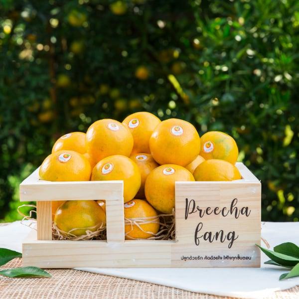กระเช้ารักษ์โลกพร้อมส้ม 21ลูก