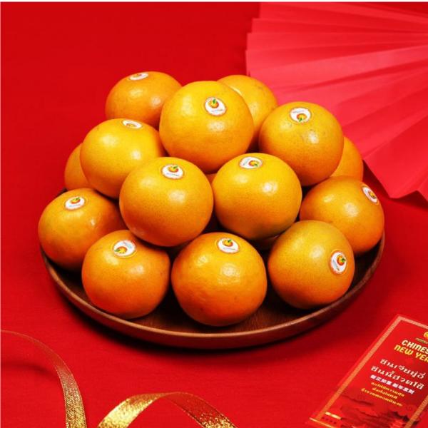 ส้มสายน้ำผึ้ง สวนส้มปรีชาฝาง