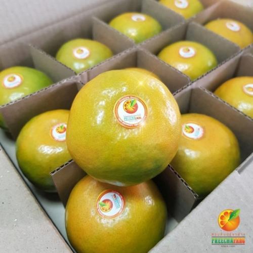 ส้มสายน้ำผึ้ง เบอร์ 6 (36 ลูก)